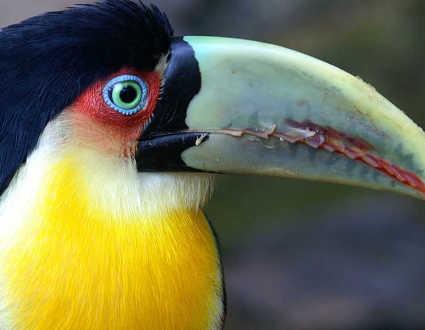Braziltours_birding&special_banner
